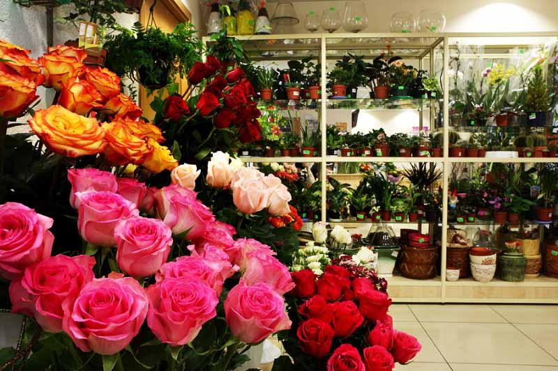 magazin cvetov