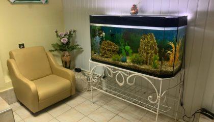 знаменитый аквариум. визитная карточка парикмахерской