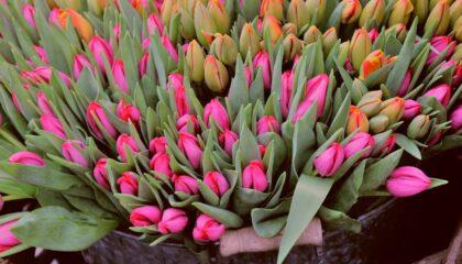 Купить готовый бизнес цветочный магазин в минске недорого